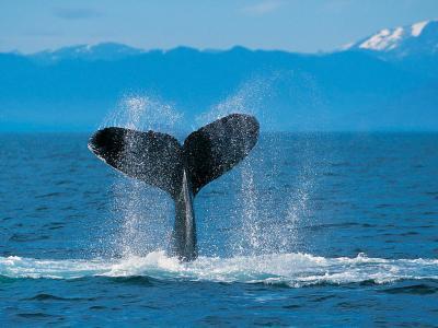 20100413234541-humpback-whale.jpg